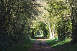 Burwarton_Tree_Tunnel
